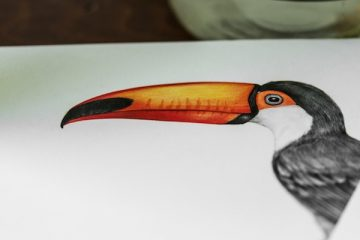 Drawing - Toucan